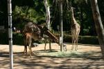 Zoo2004 171