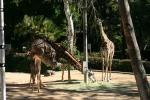 Zoo2004 172