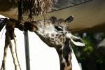 Zoo2004 174