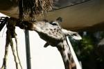 Zoo2004 175