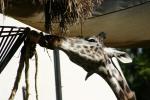 Zoo2004 176
