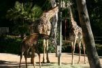 Zoo2004 177