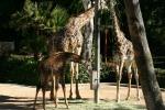 Zoo2004 178