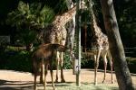 Zoo2004 179