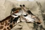 Zoo2004 183