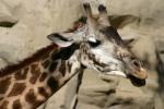 Zoo2004 184