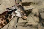 Zoo2004 185