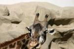 Zoo2004 186