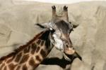 Zoo2004 187
