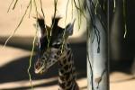 Zoo2004 188