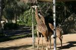 Zoo2004 189