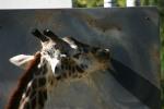 Zoo2004 191