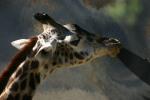 Zoo2004 192