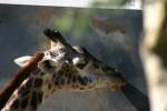 Zoo2004 193