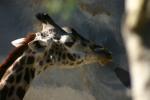 Zoo2004 195
