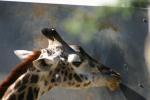 Zoo2004 197