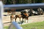 Zoo2004 202