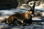 Zoo2004 209