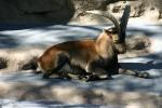 Zoo2004 210