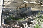 Zoo2004 216