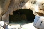 Zoo2004 221