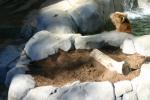 Zoo2004 222