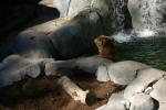 Zoo2004 223