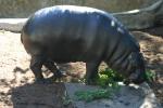 Zoo2004 229