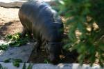 Zoo2004 231