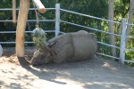Zoo2004 233