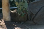 Zoo2004 234
