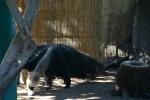 Zoo2004 235