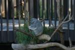 Zoo2004 237