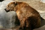 Zoo2004 240