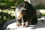 Zoo2004 241