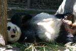 Zoo2004 242