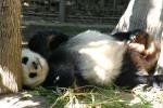 Zoo2004 243