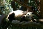 Zoo2004 244