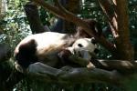 Zoo2004 245