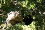 Zoo2004 246