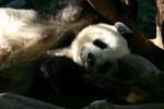 Zoo2004 247